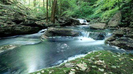 wood, stream, water