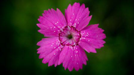 wood stud, flower, petals