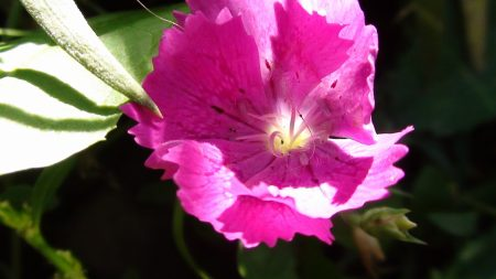 wood stud, flower, pink
