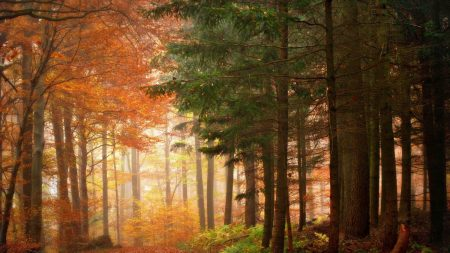 wood, trees, autumn