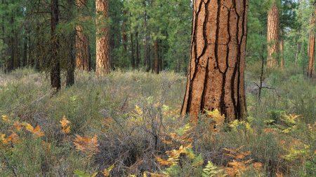 wood, trees, bark