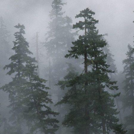 wood, trees, coniferous