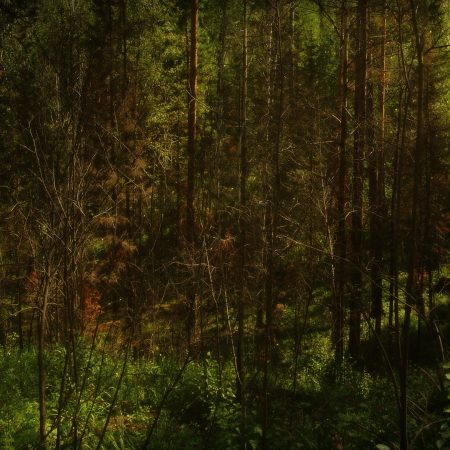 wood, trees, darkness