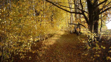 wood, trees, leaf fall