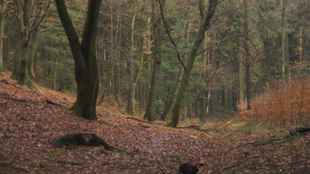 wood, trees, leaves