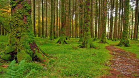 wood, trees, moss