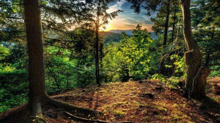 wood, trees, rising