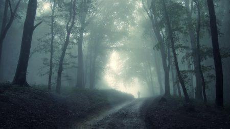 wood, trees, road