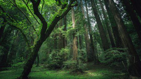 wood, trees, trunks