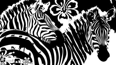 zebra, flowers, lines